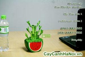 cay-phat-loc